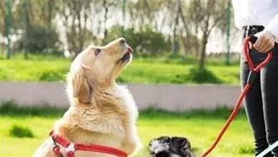 狗狗為什麼總是喜歡盯著我們看呢?