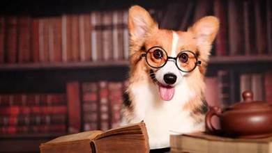 有這5個特徵的狗狗,說明它是來報恩的,你別不知道